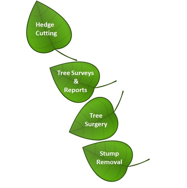 Tree Pruning Southampton Hampshire
