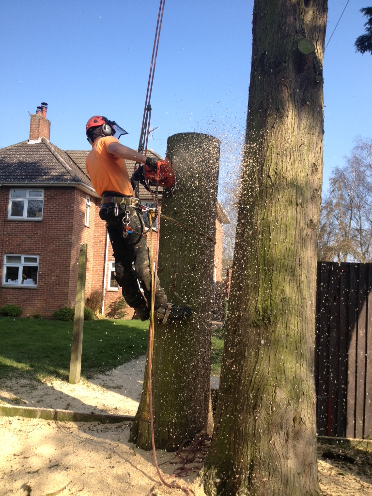 Tree Surgeon Job / Arborist climber Job in Southampton