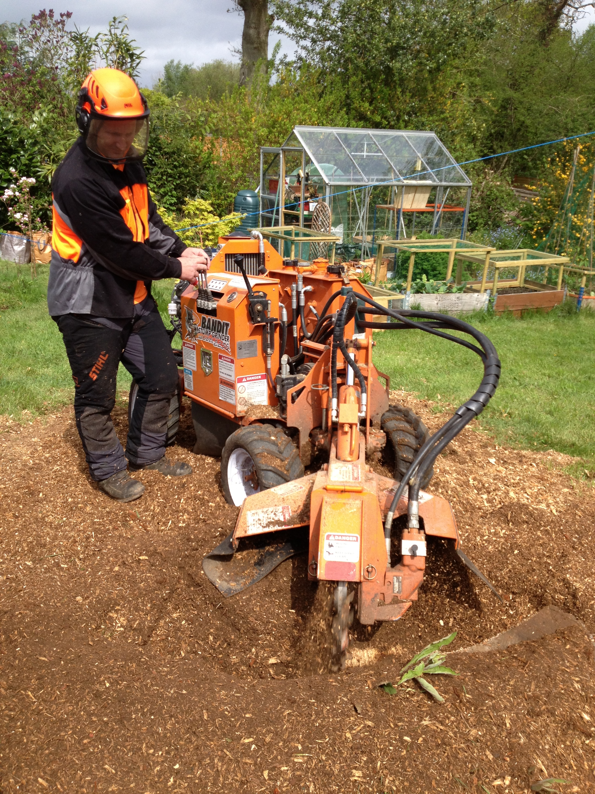 Tree Stump Removal Shirley, Southampton
