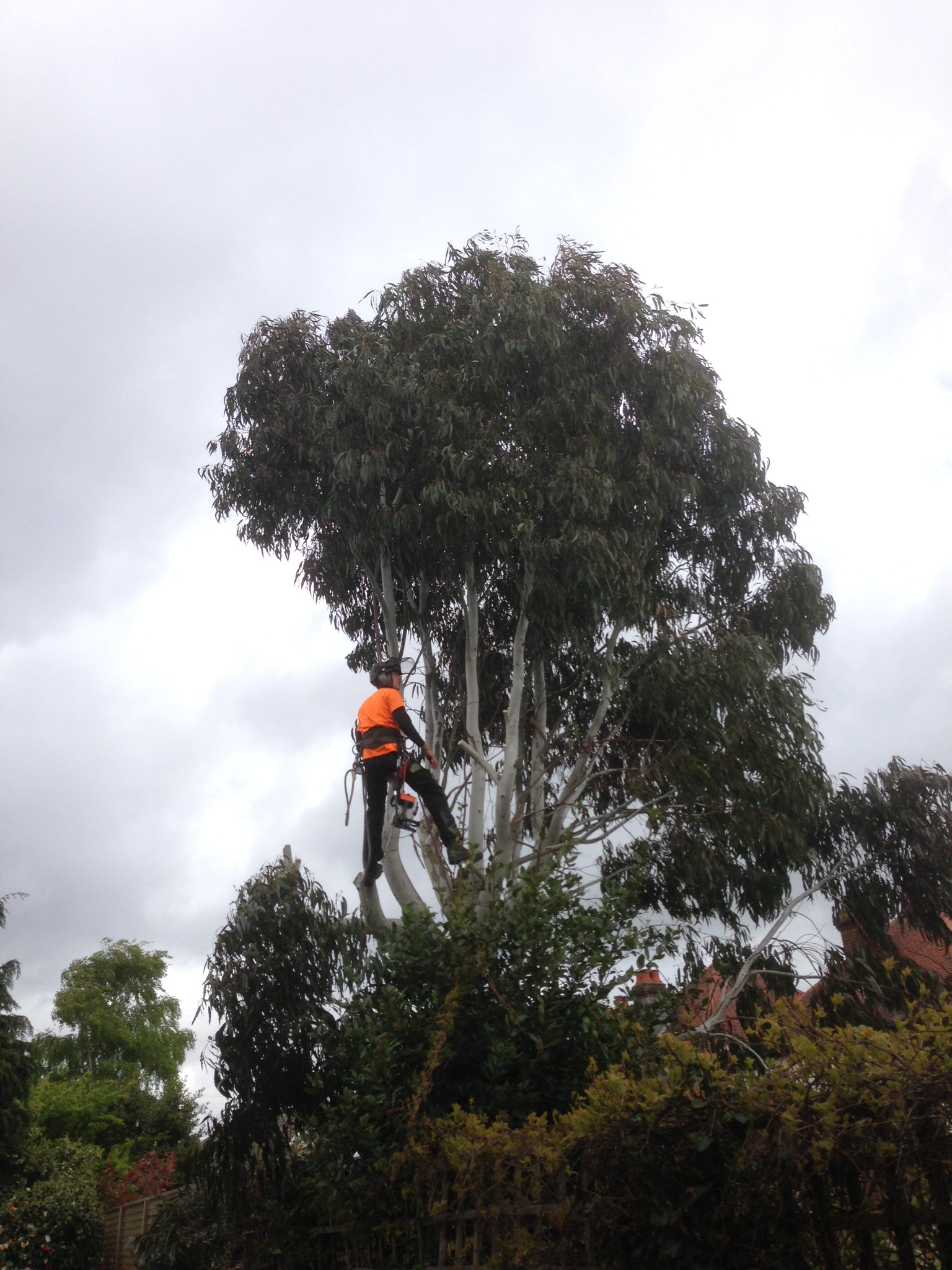 Tree Care, Tree Maintenance, Southampton, Hampshire