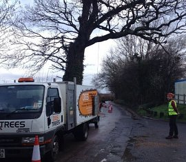Large Decayed Oak Tree removal Southampton Hampshire
