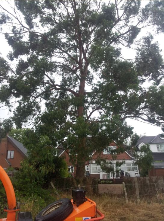 Tree Removal Southampton Hampshire