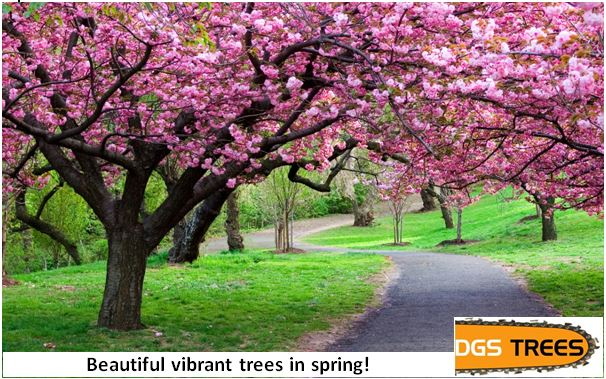 Beautiful vibrant trees in Spring – DGS Trees