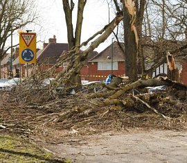 Trees & High Winds in Southampton, Hampshire