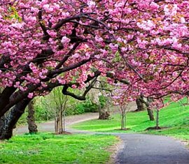 Beautiful vibrant trees in Spring