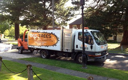 Tree services by DGS Trees