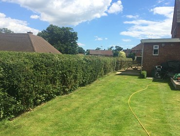 Hedge cutting to tidy hedge