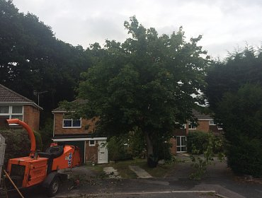 Tree Shaped in Southampton, Hampshire