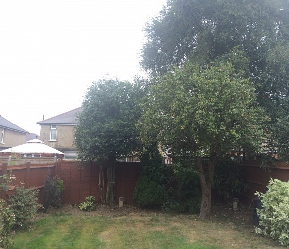 Untidy trees Southampton Hampshire - after photo