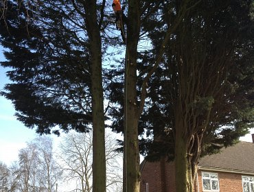 Tree removal in Archers Road