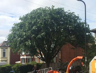 Reducing the size of a tree in Woolston, Southampton