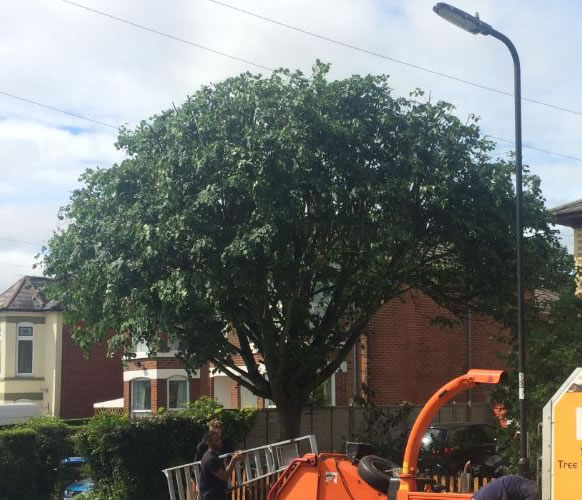 Tree Size Reduction, Woolston, Southampton - after photo