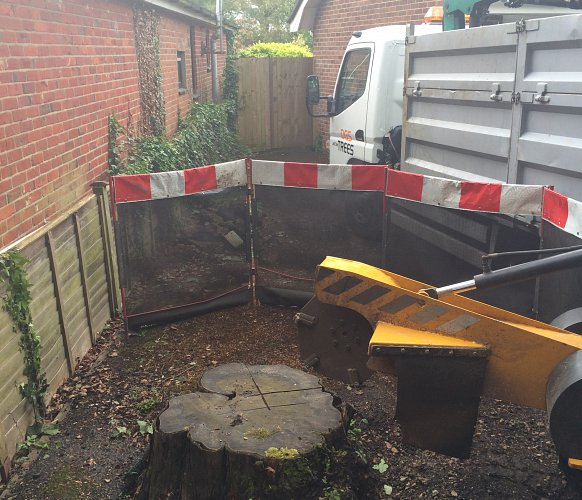 Tree Stump Removal, Romsey, Hampshire - before photo