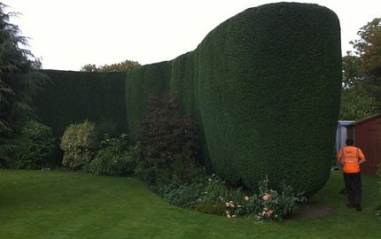 Hedge cutting in Southampton