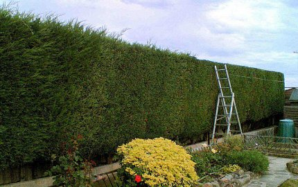 Hedge trimming and tree cutting